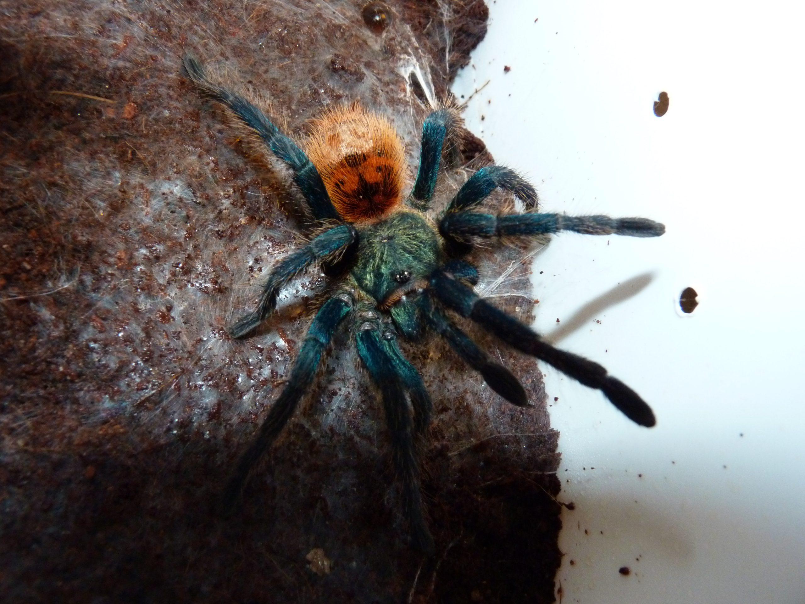 Arthropoda - Geleedpotigen